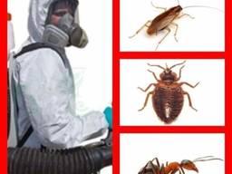 Уничтожение тараканов, клопов, клещей. Днепр, Новомосковск