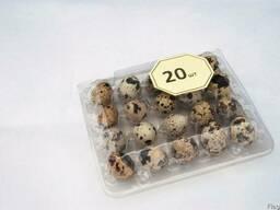 Лотки на 20 шт. перепелиных яиц Упаковка -