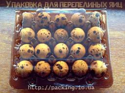 Упаковка пластиковая под перепелиное яйцо в украине