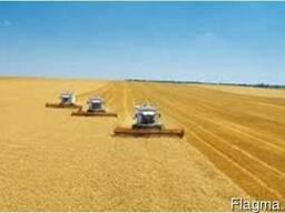 Услуги аренда комбайна уборка урожая сои зерновых