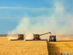 Услуги комбайна уборка зерновых рапса кукурузы подсолнуха