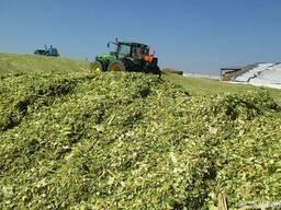 Уборка кукурузы на силос подбор валков сенаж кормаж
