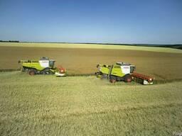Услуги по уборке урожая сои подсолнечника кукурузы свеклы