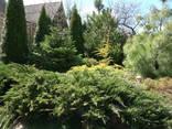 Услуги садовника - фото 1