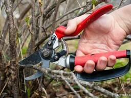 Услуги садовника. Обрезка деревьев