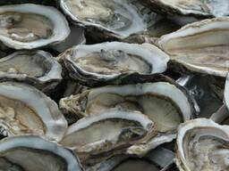 Устрица №4 (Fine Oysters from Normandy)
