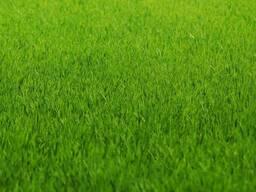 Автополив. Устройство газона посевной рулонный газон цена