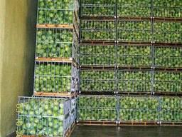 Утеплення овочесховищ та фруктосховищ