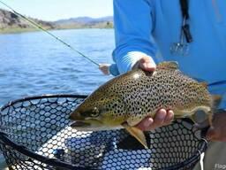 Консультации по уходу за осетровыми, лососевыми рыбами