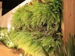 Вертикальное озеленение, живая стена, зелёная стена