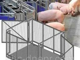 Весы для свиней
