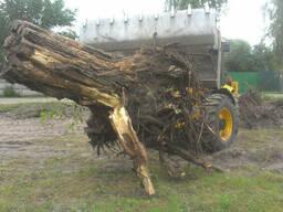 Виконуємо спил срезка срезание валка вырубка деревьев,