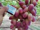 Виноград из Узбекистана - фото 1