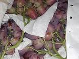 Виноград из Узбекистана - фото 4