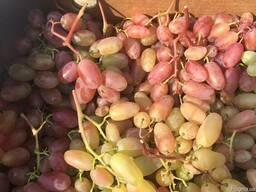 Виноград столовый ранний. Цена снижена