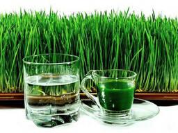 Витграсс сок с ростков пшеницы.