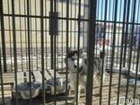 Вольеры Разборные для собак и других животных - фото 1