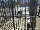 Вольеры Разборные для собак и других животных - фото 2