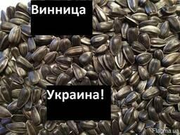 Куплю Подсолнух Львов Украина