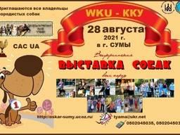 Предлагаем записаться на Всеукраинскую выставку собак 2021