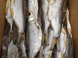 Вяленая рыба. Рыба вяленая. Плотва. Семга. Лещ. Камбала.