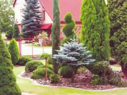 Выполним пересадку и посадку деревьев, а также