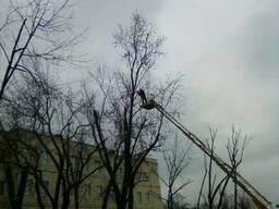 Зрізання обрізка дерев Подрібнення гілок Розчищення ділянок