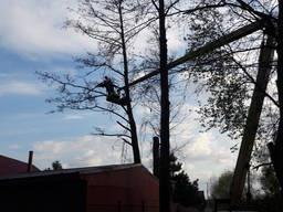 Вырубка деревьев, Кронирование деревьев обрезка деревьев
