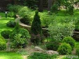 Высадка декоративных растений