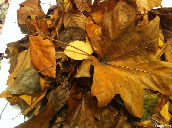 Вывоз листьев. Уборка листвы