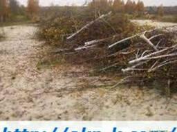 Вывоз мусора Демонтаж зданий, Спил аварийных деревьев.