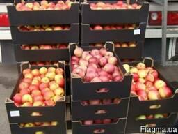 Яблочный лоток 560*380*150 мм. под автомат линию
