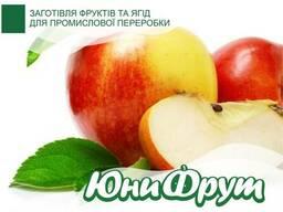 Яблоки для промышленной переработки от 20 т