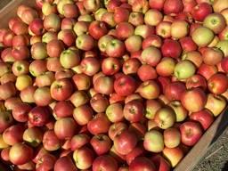 Яблоки оптом на постоянной основе