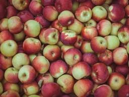 Яблоки от производителя.