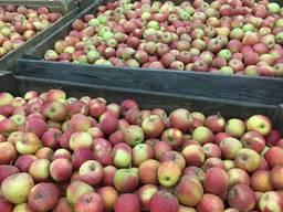 Яблоки с холодильника