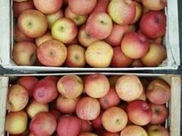 Яблоки, сорт Фуджи, урожай 2018 года