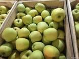 Яблоко Груша - фото 1