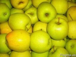 Яблоко оптом Дакоста, Флорина,Голден, Лиголь, Пинова и др.
