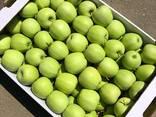 Яблоко производсво РБ - фото 2