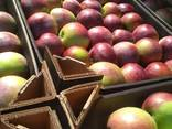 Яблоко производсво РБ - фото 4