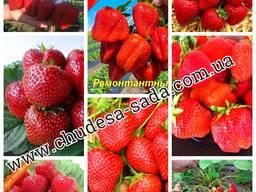 Яблоня, груша, слива, вишня, черешня, персик, абрикос и т. д