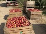 Яблука відмінної якості - фото 4
