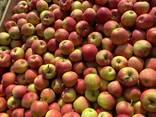 Яблука відмінної якості - фото 5