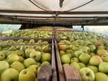 Яблука відмінної якості - фото 7