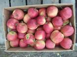 Яблука відмінної якості - фото 8