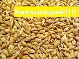 Куплю ячмень Хмельницкий Украина