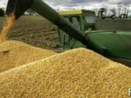 Ячмень, пшеница, подсолнечник. Урожай 2017-2018г