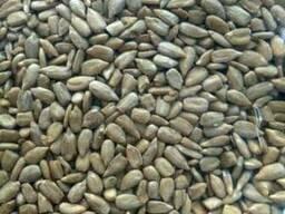 Ядро подсолнечника sunflower kernel