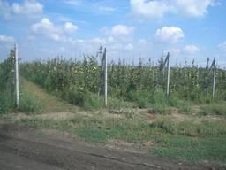 Якорное крепление с тросиком для сада и винограда - фото 2